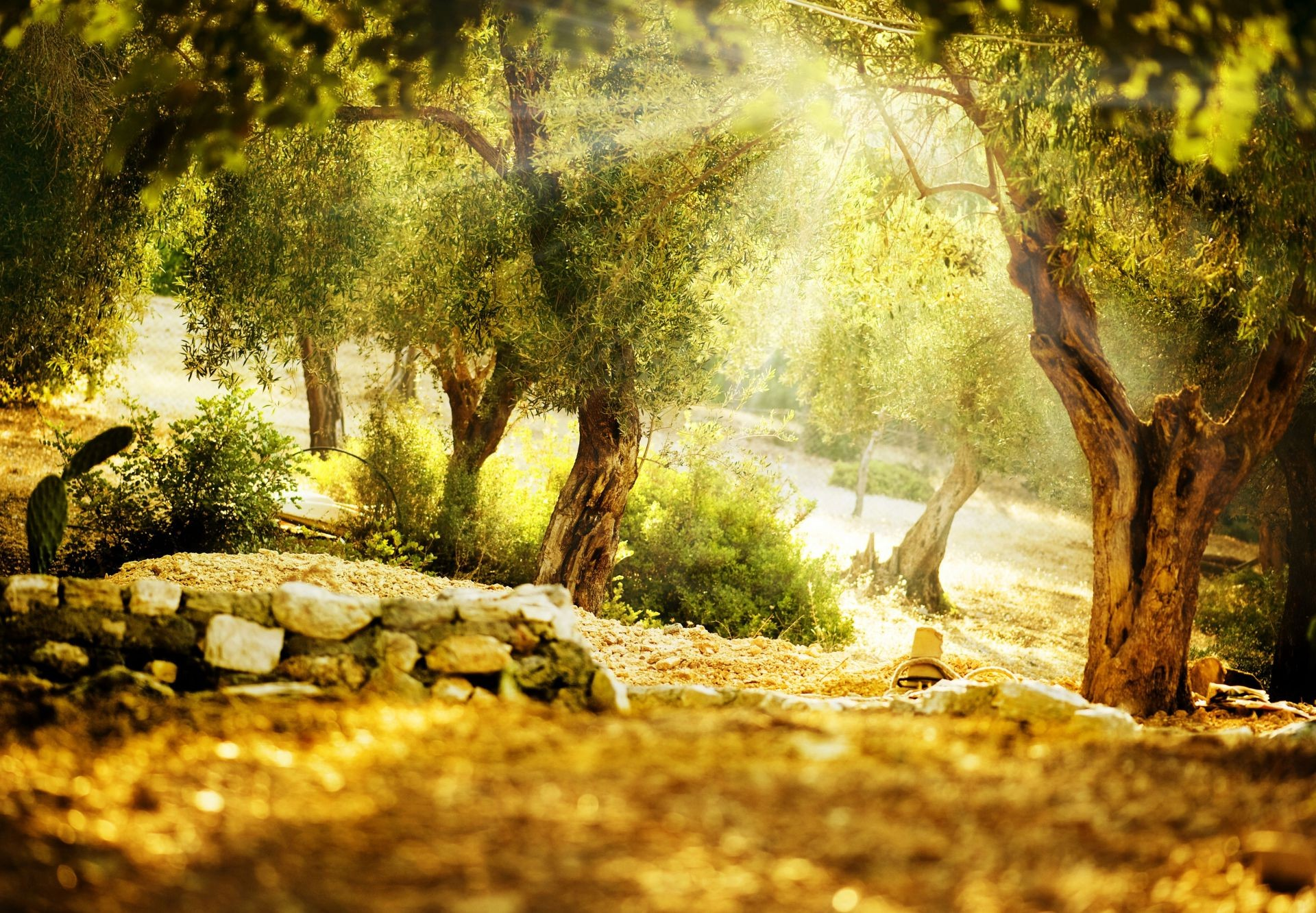 the sunlight and rays wood nature tree landscape fall leaf outdoors park water scenic travel environment summer flora fair weather moss