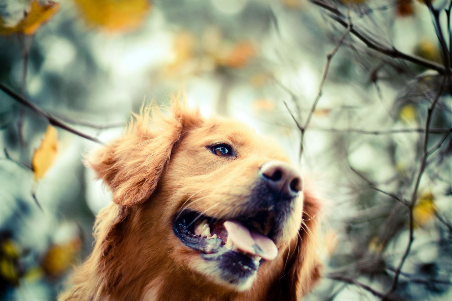 dogs mammal portrait pet dog animal cute fur outdoors canine nature