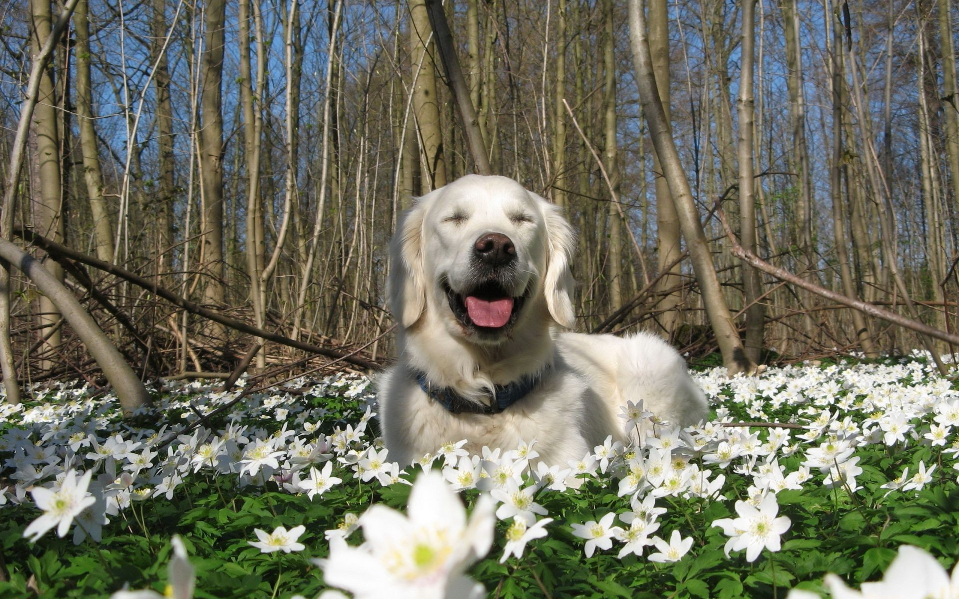 nature spring flowers Dog