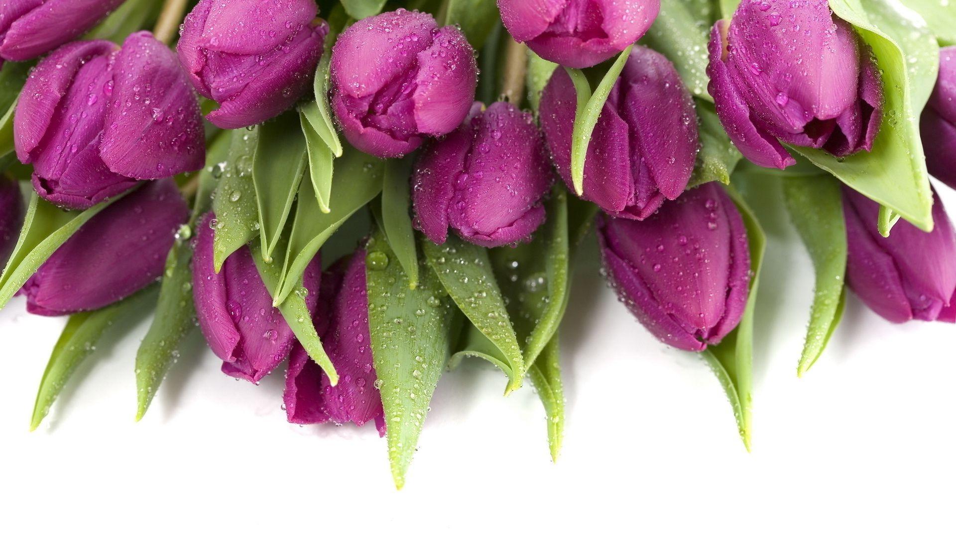 букет,тюльпаны,листья  № 415720  скачать
