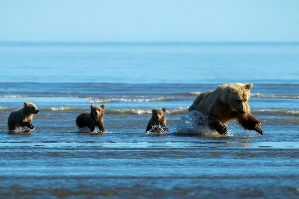 bear hunting water babies