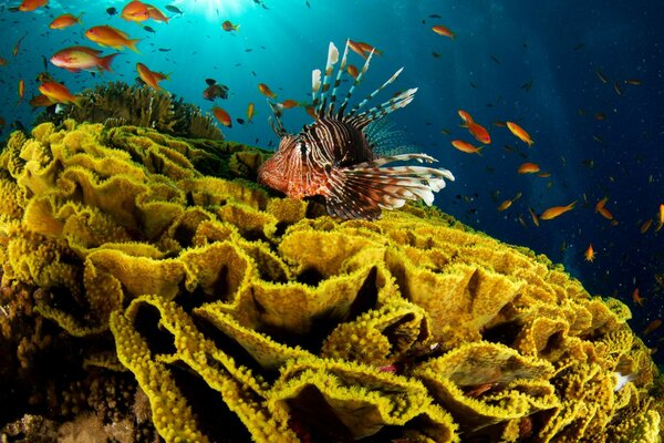 sea lion water Fish coral ocean