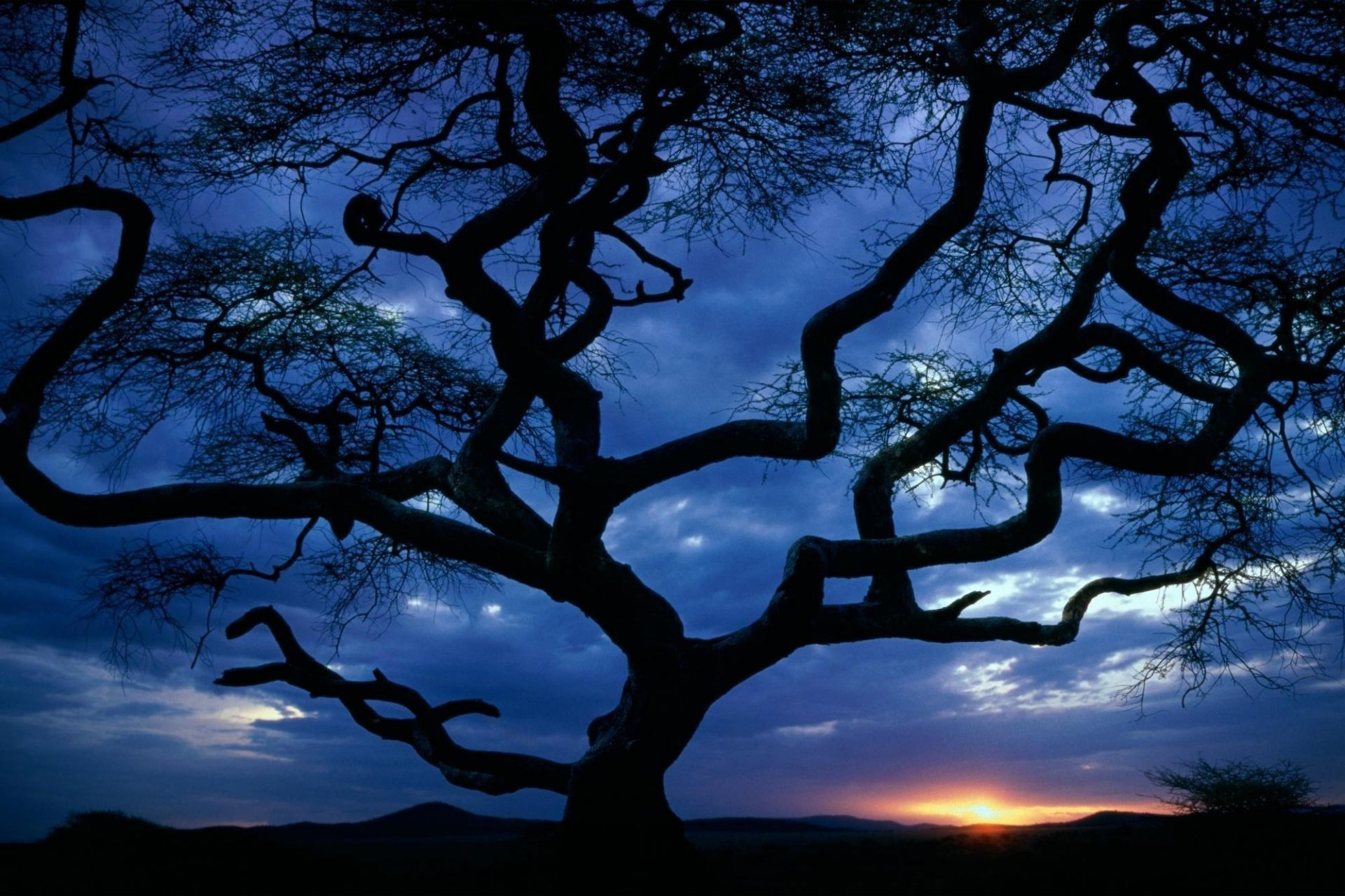 evening crookedly the sunset tree silhouette