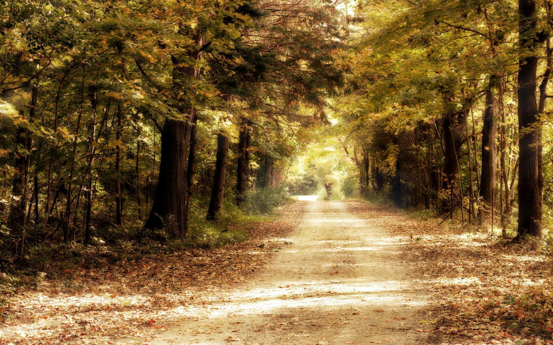 Trees Nature Forest Road Android Wallpapers For Free