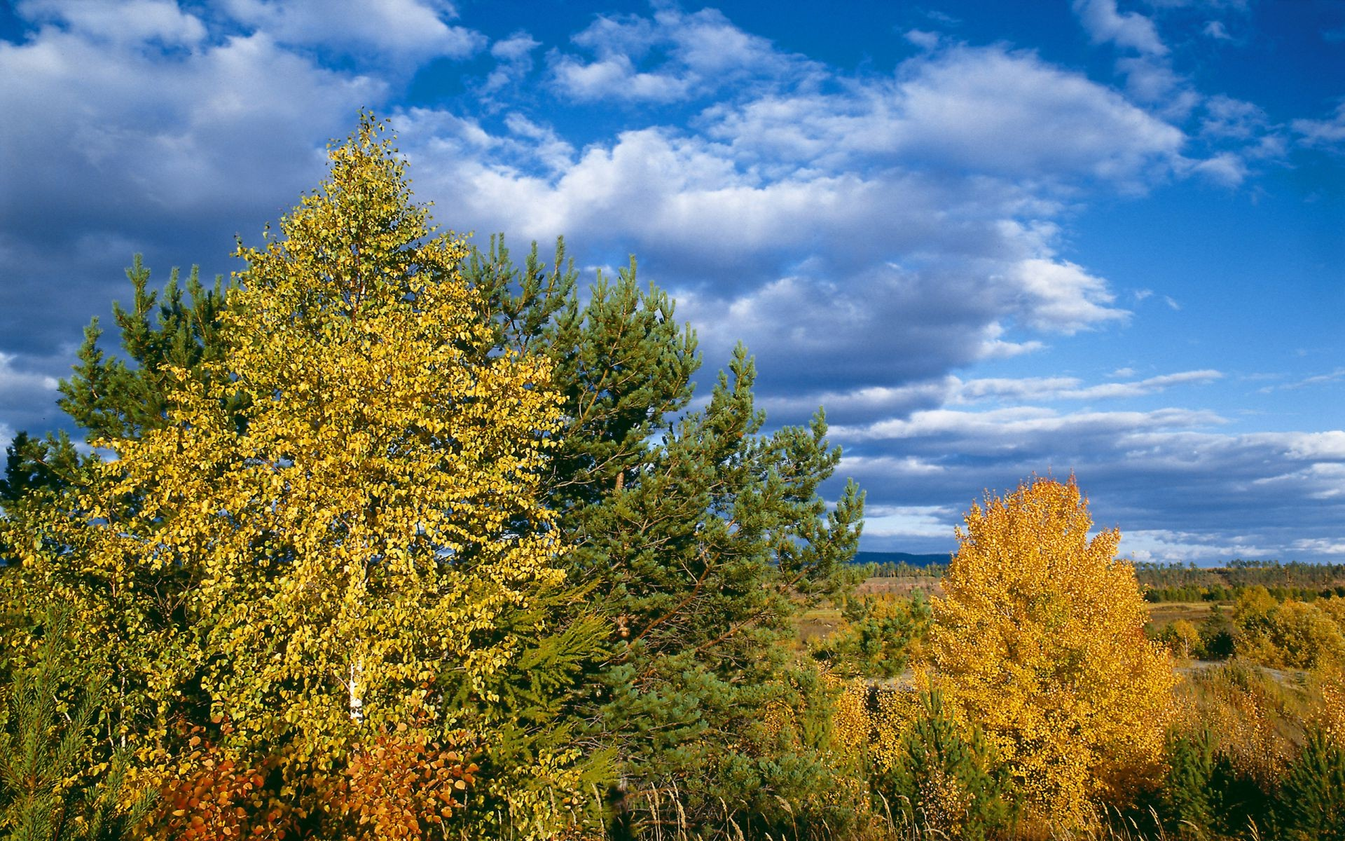 Sky clouds autumn nature trees yellow leaves scenery