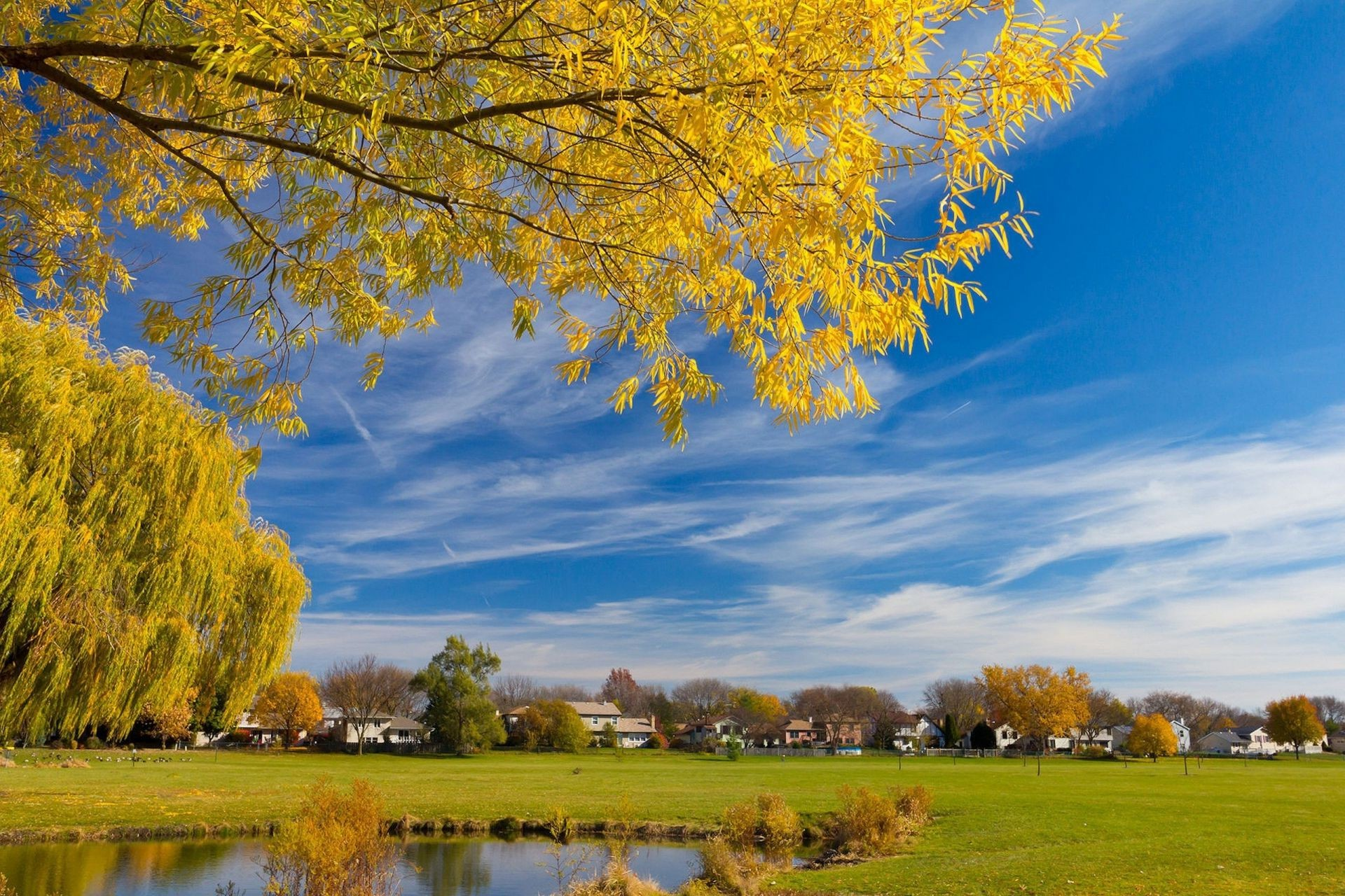rivers ponds and streams fall tree nature leaf landscape season outdoors bright wood rural park fair weather countryside gold scenic scene grass sun sky
