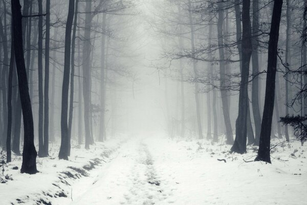 winter road forest mist snow