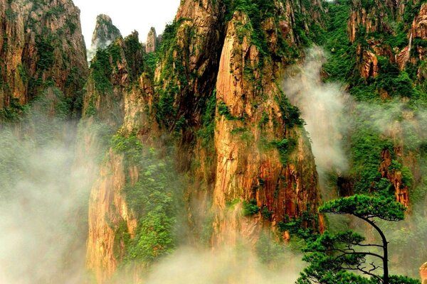 Mountain Plants in Fog mountains nature fog forest