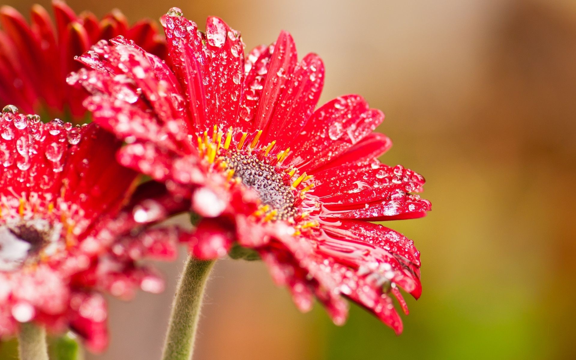 droplets and water nature flower flora summer leaf garden color bright floral petal close-up beautiful blooming growth
