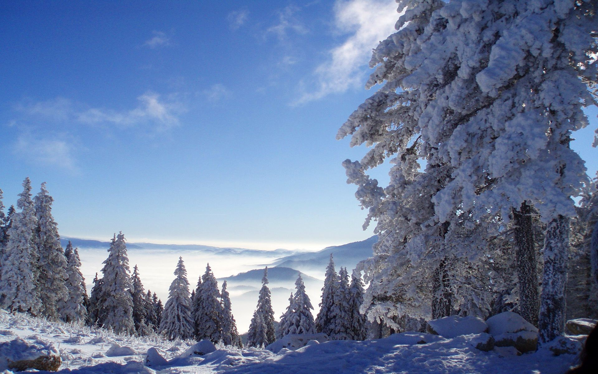 winter snow nature mountains forest
