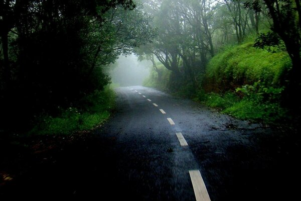 cloudy nature road forest mist