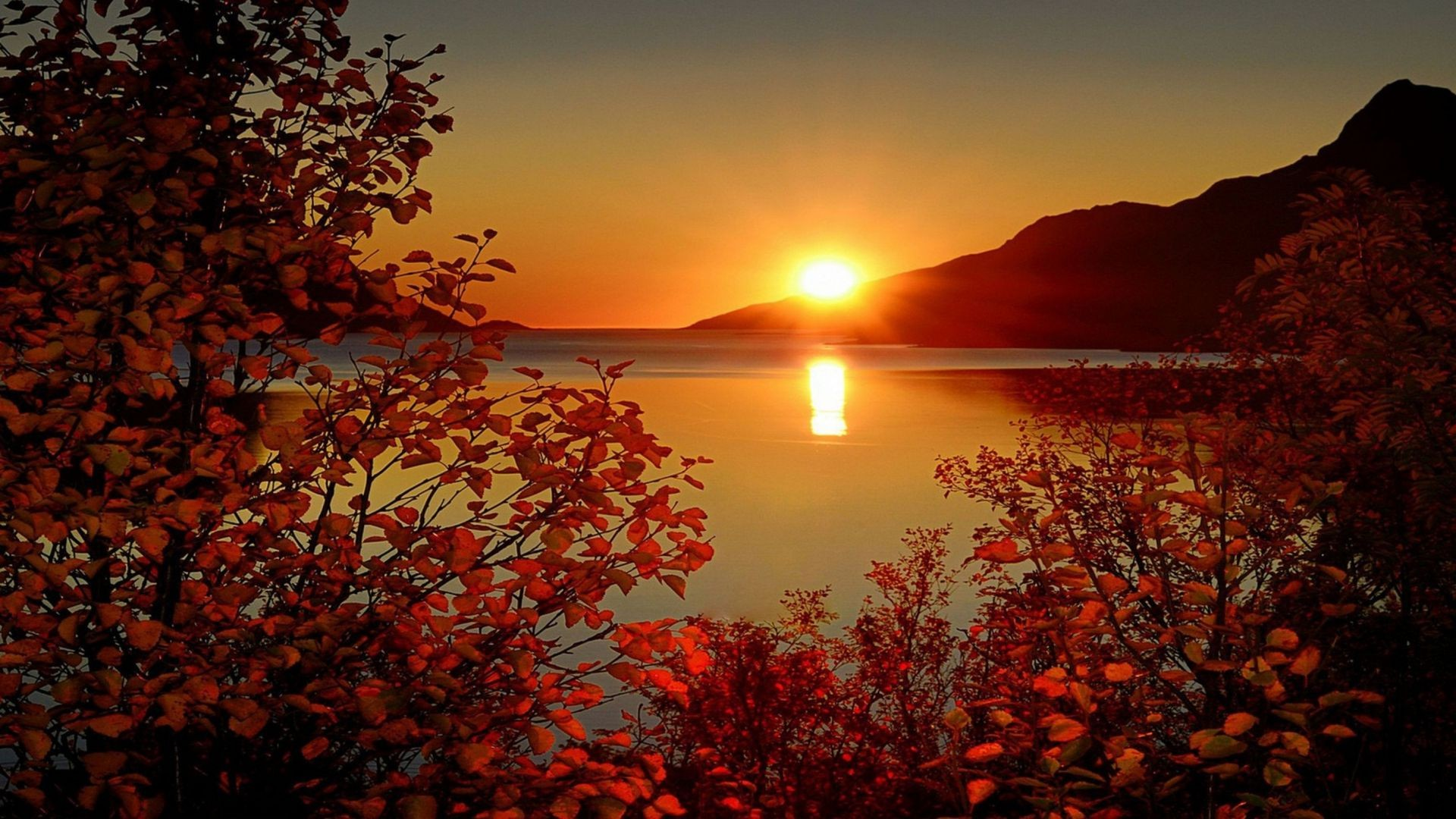 Autumn Sky Sun Sunset Rays Mountain Branches Leaves The