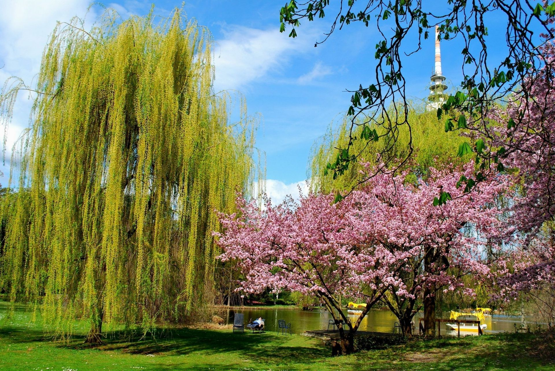parks tree park season flower nature landscape branch garden flora springtime bright scenery scene leaf scenic cherry environment beautiful outdoors color