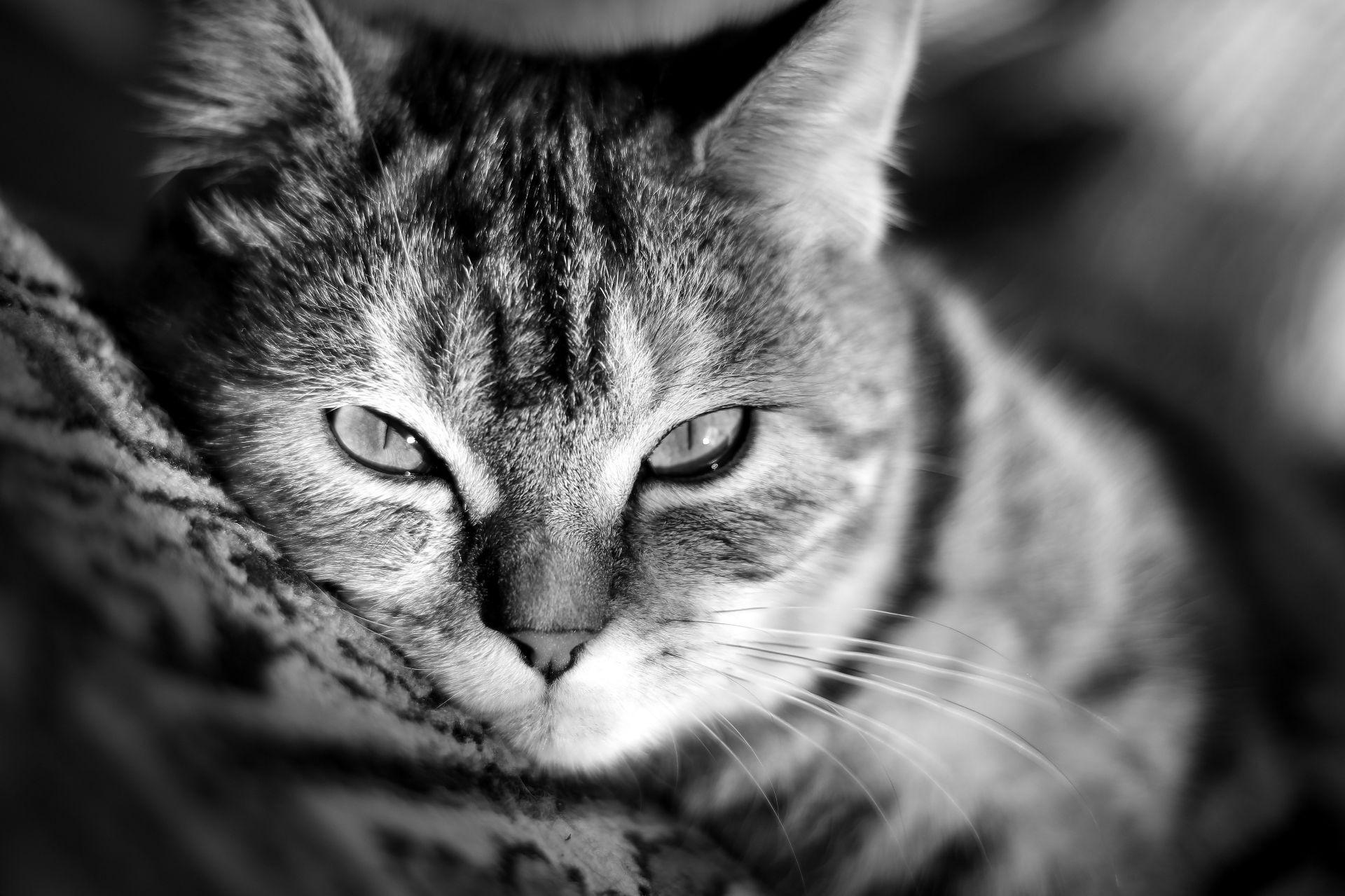 Cat Wallpaper Kitty Cat Look Wallpaper Mustache Nose Cat Desktop