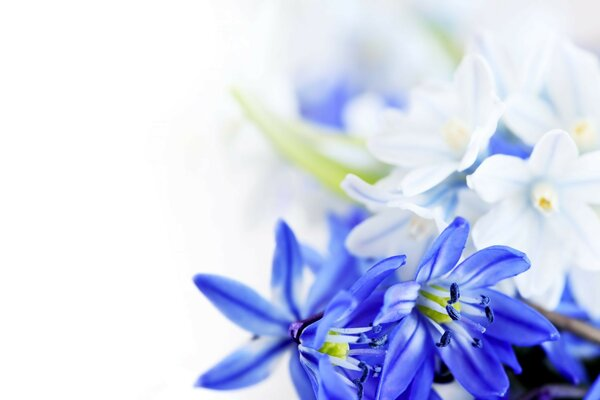 Flowers leaves blue flowers hd March 8