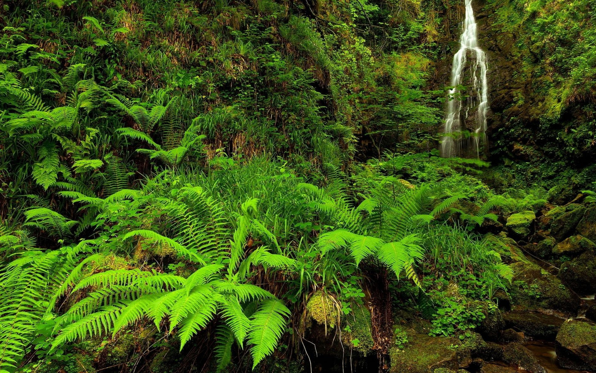 Mountain stream nature fern