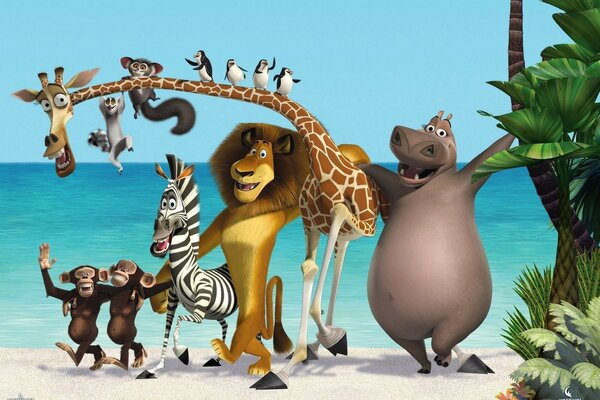 Zebra three new Madagascar new cartoon Madagascar 3