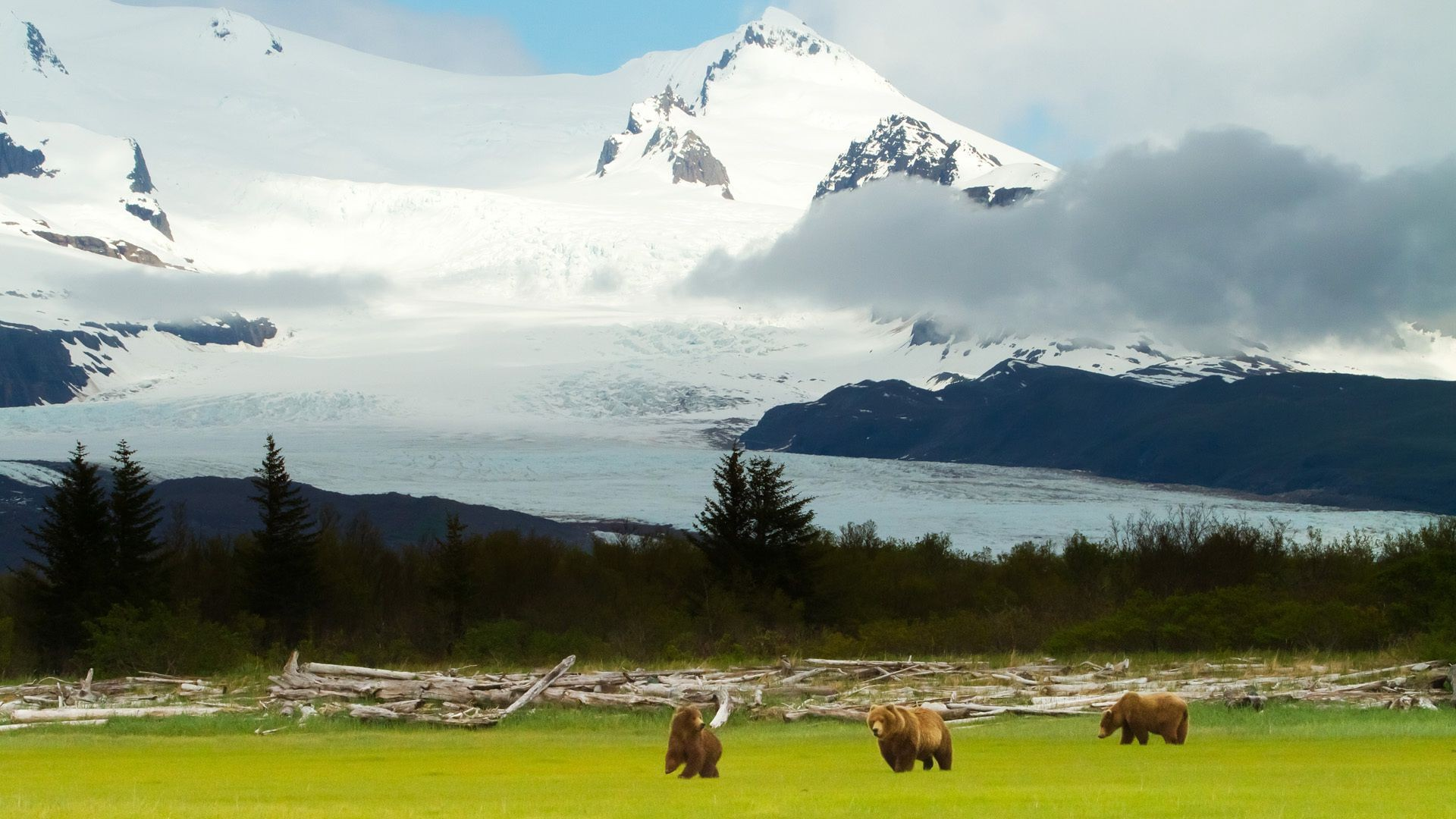 Mountain Bears Alaska Grizzly Scenery Android Wallpapers For Free