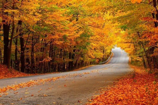 Road forest autumn yellow foliage