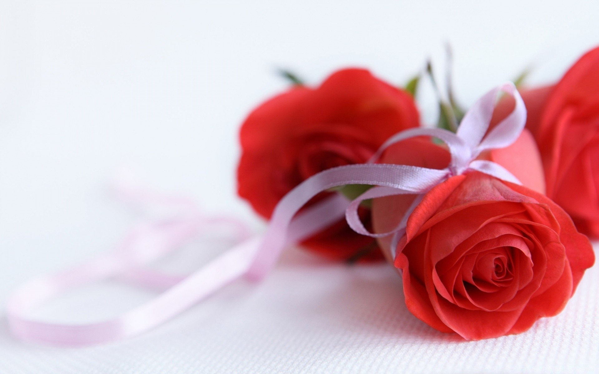 Red Roses On White Background Android Wallpapers For Free