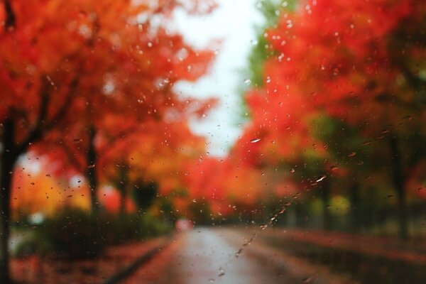autumn drops glass rain trees