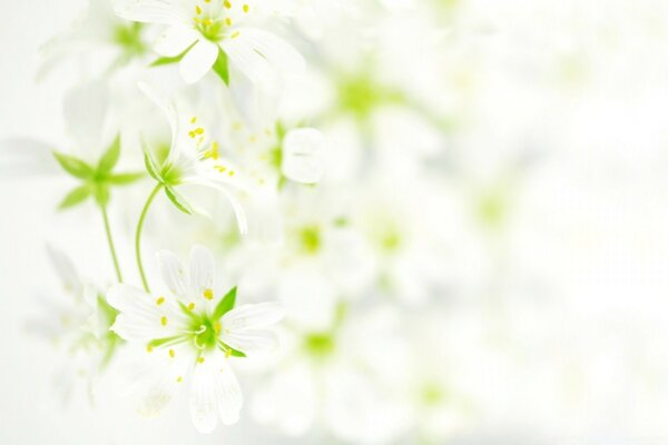 Blurred White Flowers