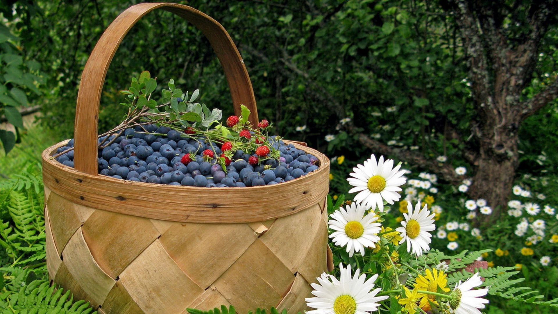 chamomile berry Basket