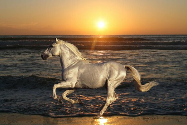 a horse a stallion galloping nature of the horse
