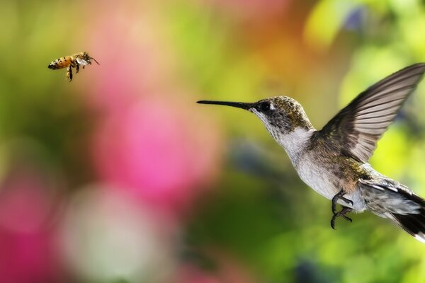 HUMMINGBIRD AND BEE - CHILE