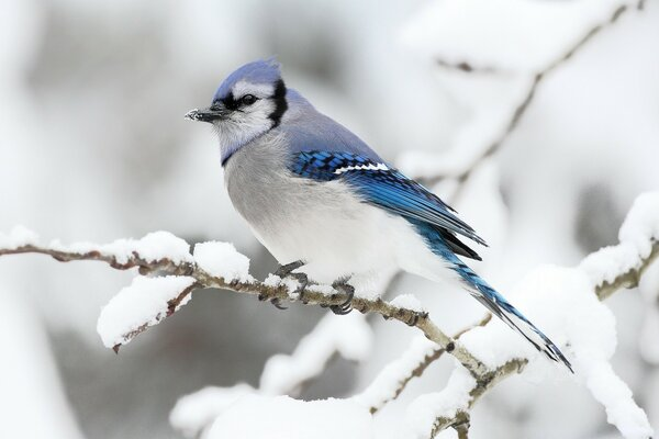 Beautiful Bird Winter