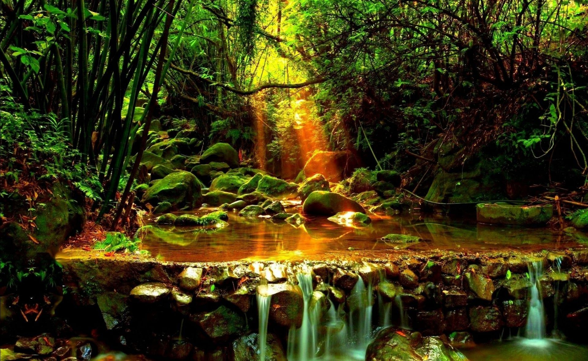 Nature forest stream the rays