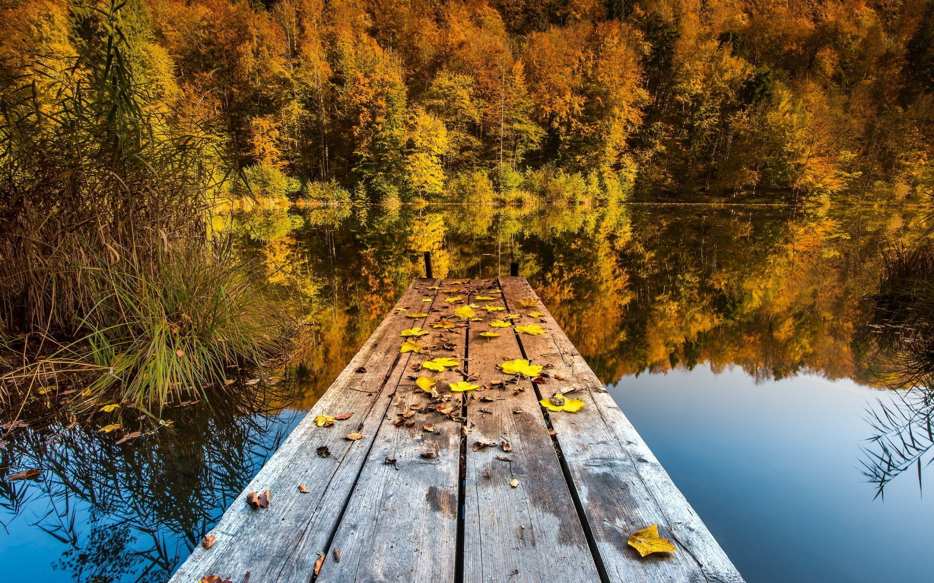 lake wood fall tree landscape nature water scenic river outdoors leaf daylight season reflection travel park environment scenery fair weather