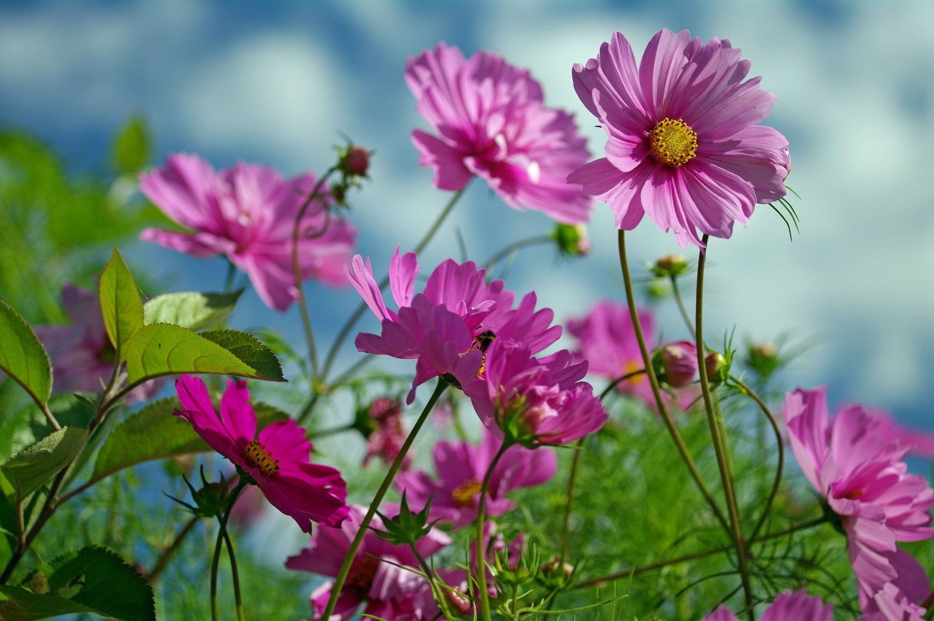 Summer beauty nature flowers android wallpapers for free izmirmasajfo