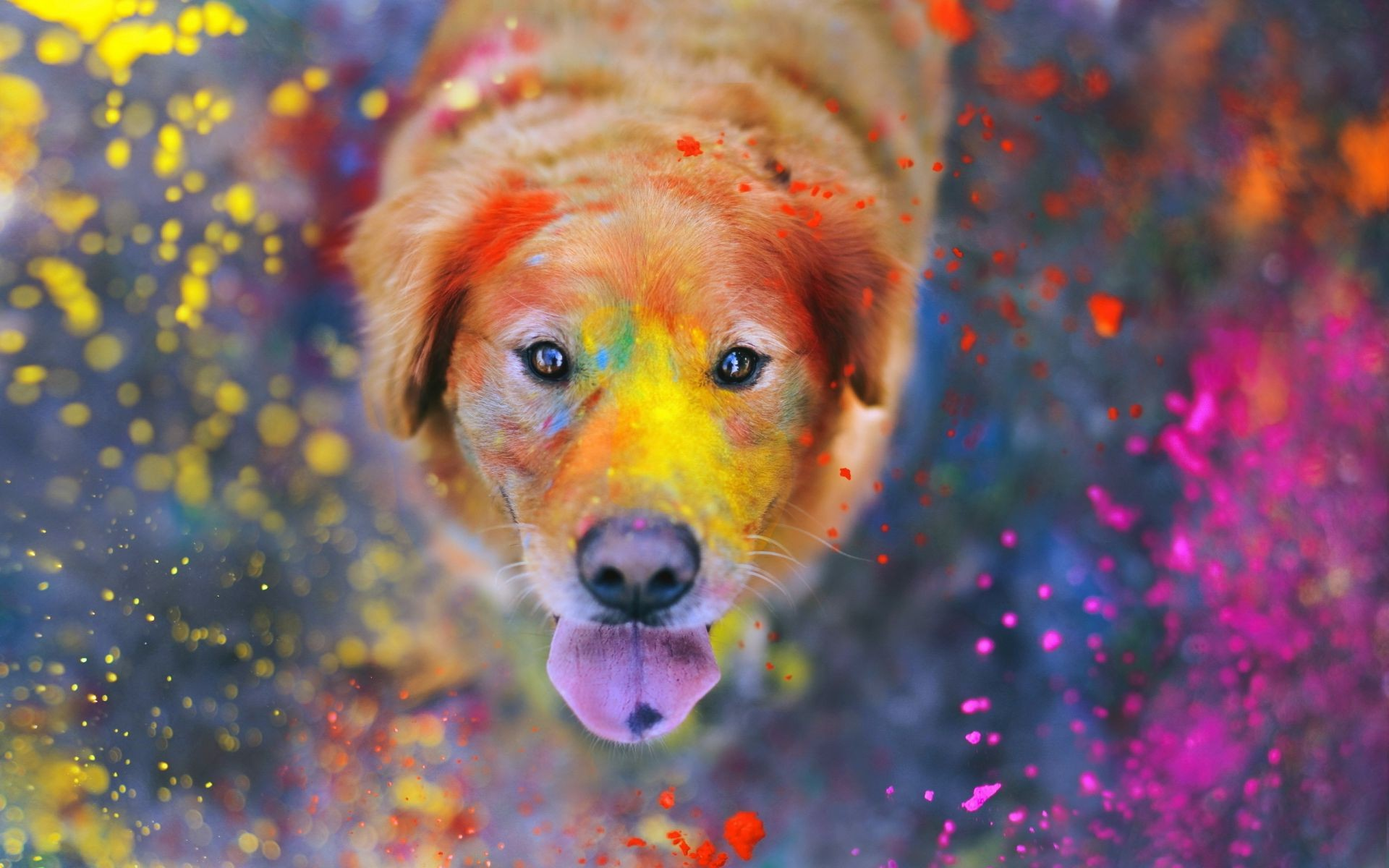 dogs nature flower color cute