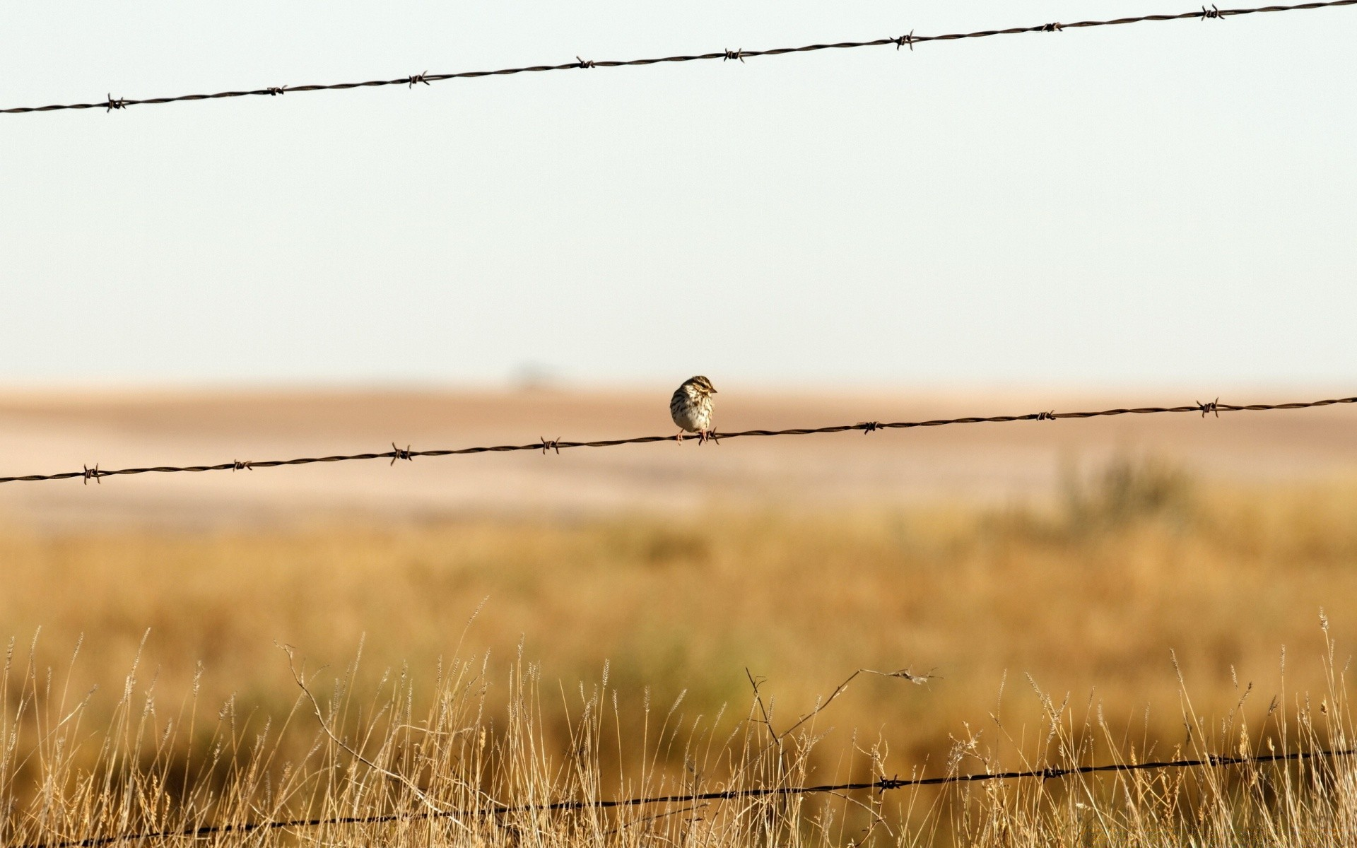 Gray And Orange Bird On Barb Wire Hd Wallpaper Wallpaper Flare