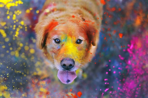 dog paints the explosion of colors