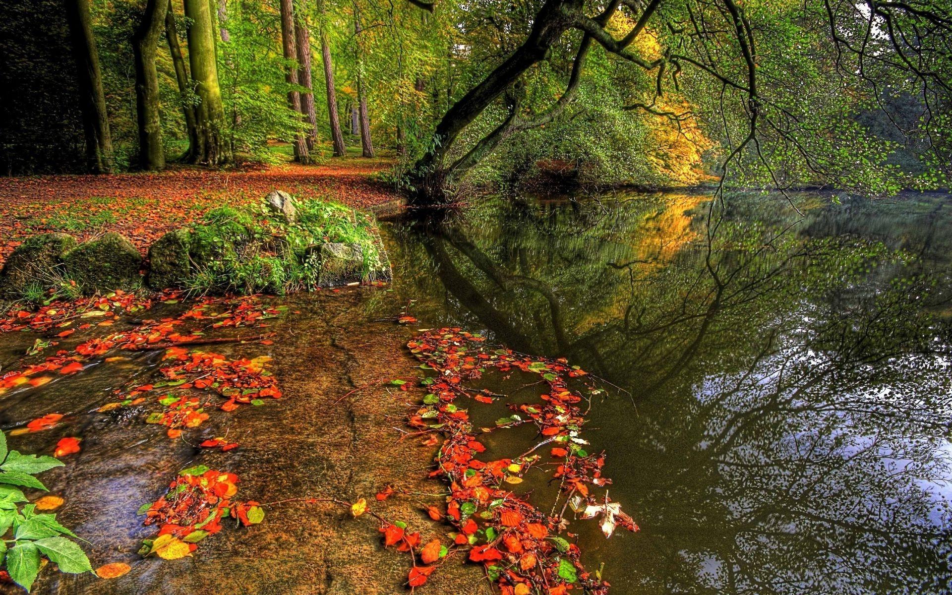обои широкоформатные на рабочий стол бесплатно красивая природа осень № 241150  скачать