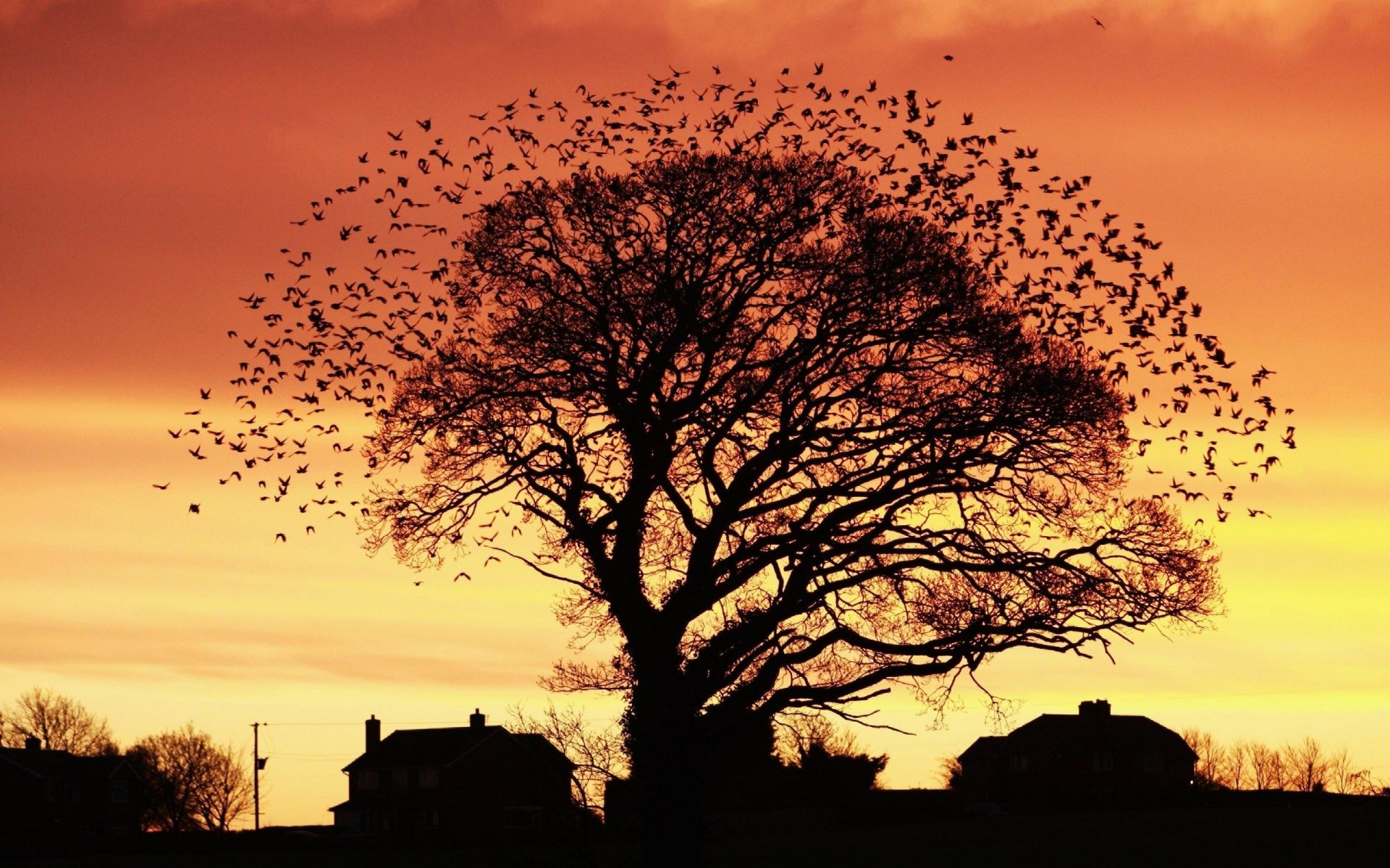 tree. at sunset, the fall of the house of a flock of birds