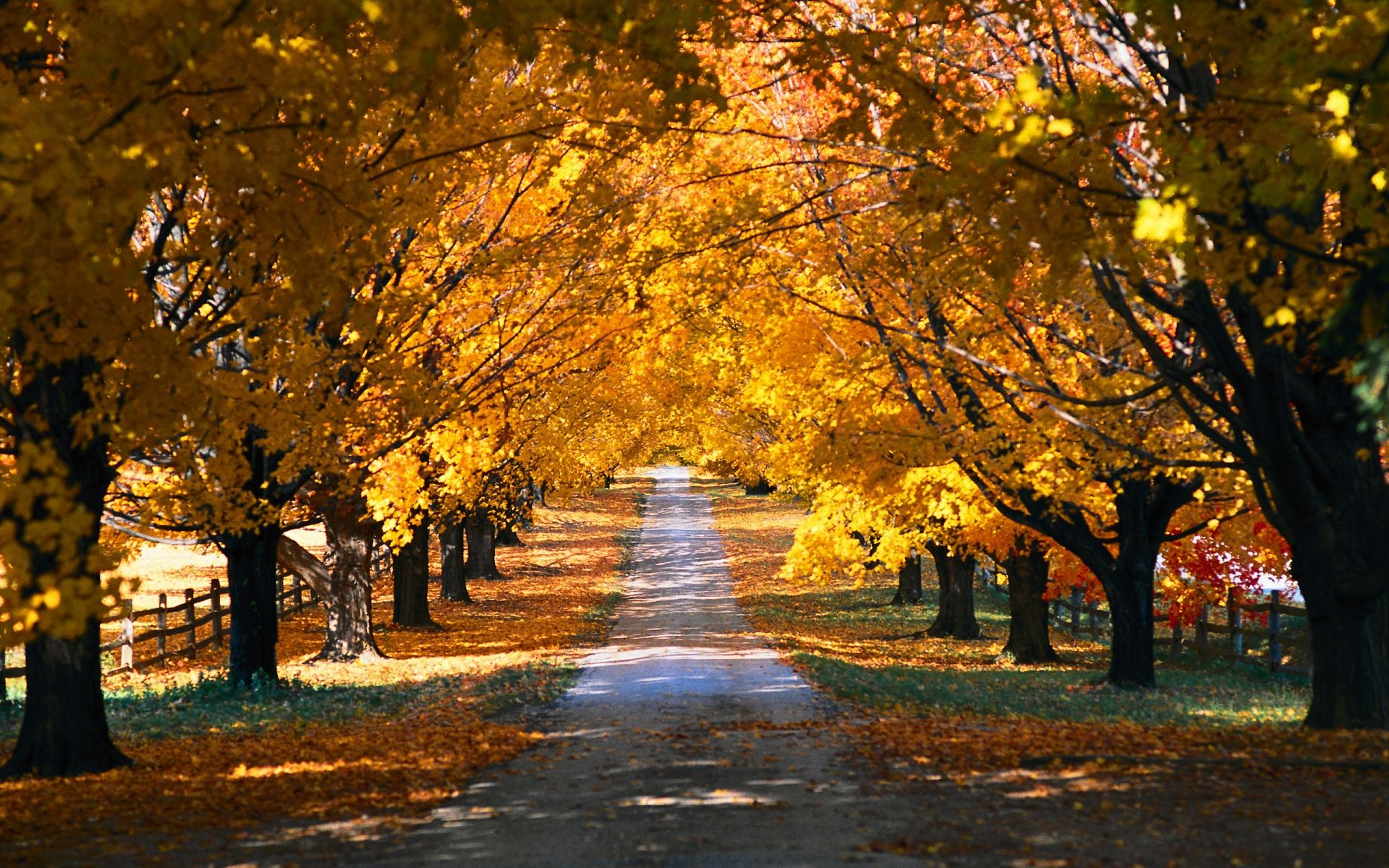 autumn fall tree leaf landscape road park guidance alley wood scenic maple branch avenue gold season dawn footpath outdoors nature