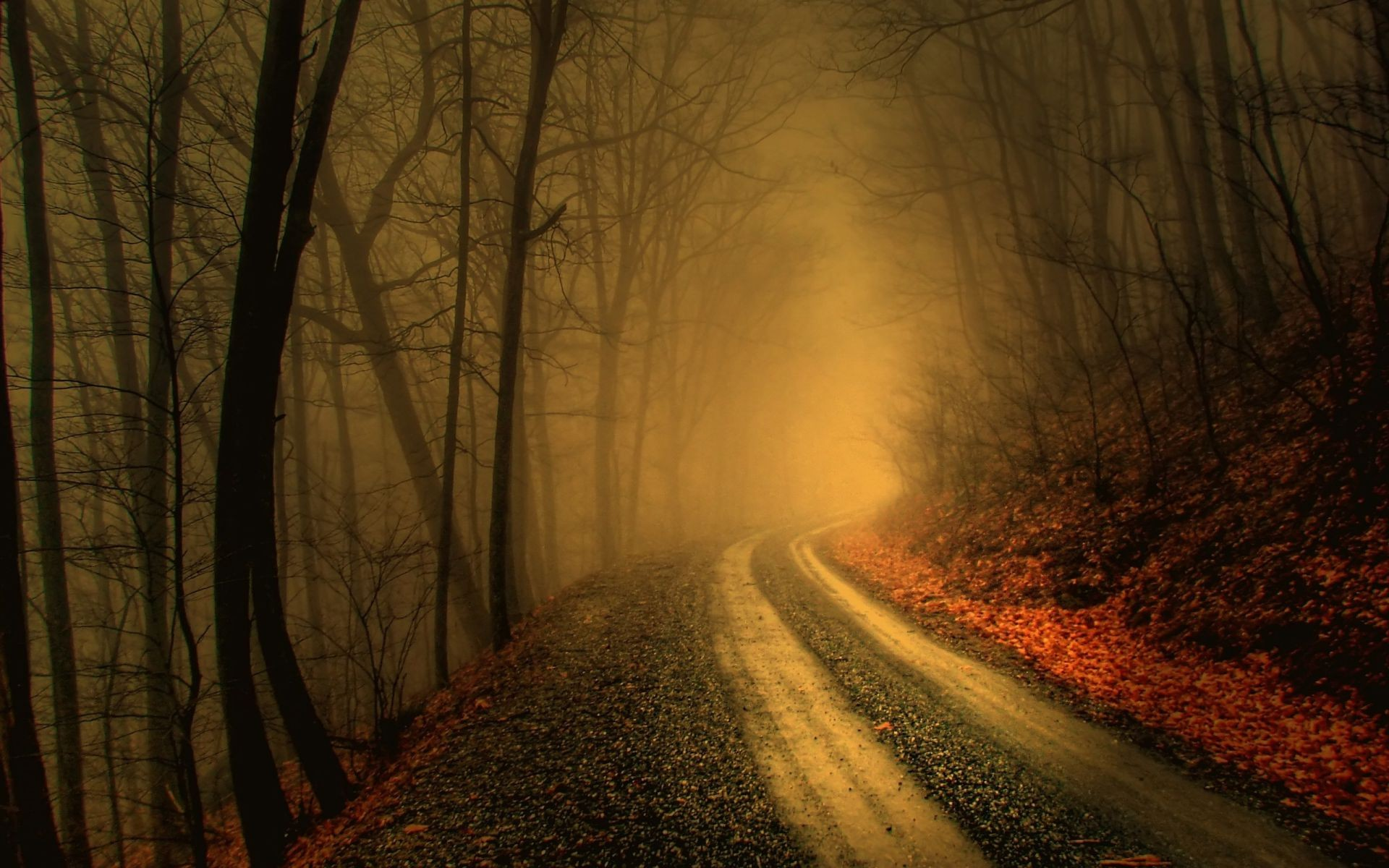the darkness of the damp autumn road