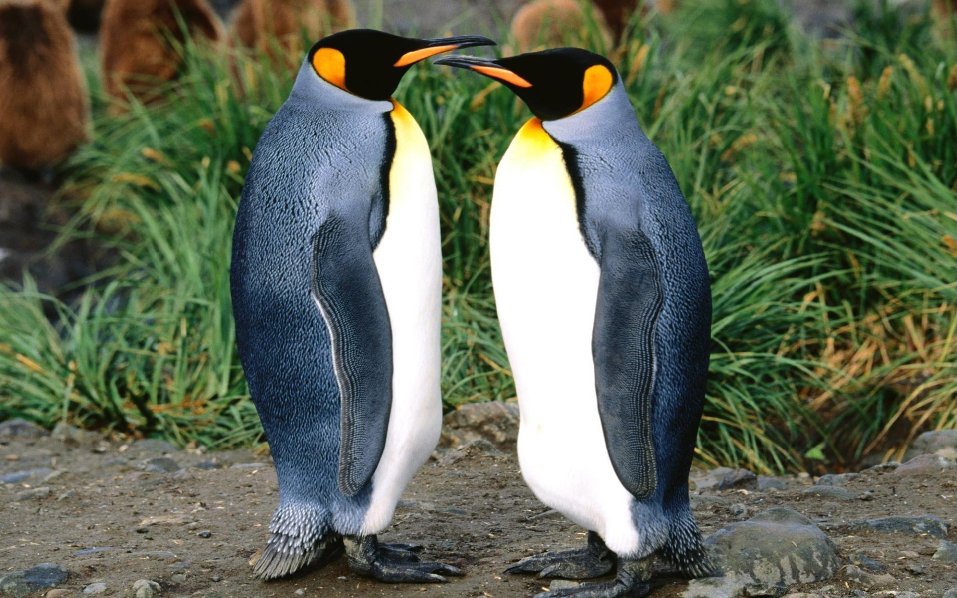 Facts about Penguins The Fab Mag
