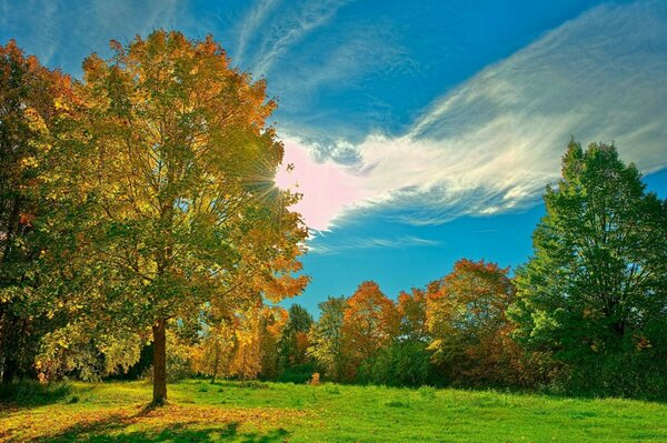 Nature landscape meadow trees autumn sunlight