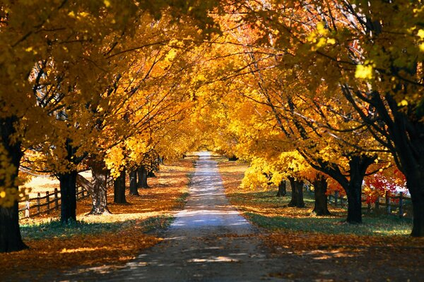 Golden autumn trees alley lines beauty