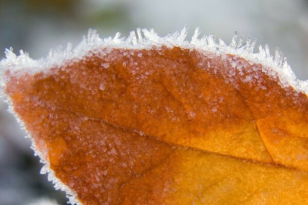 autumn leaf macro frost beautifully