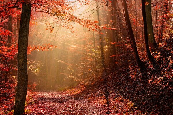 Nature autumn light forest