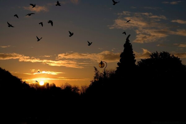 Birds In The Park, Sunset