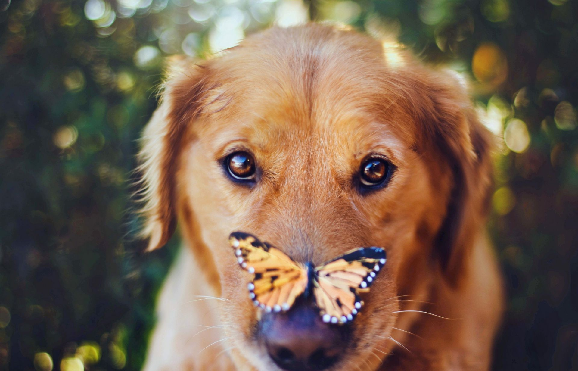 dog butterfly look