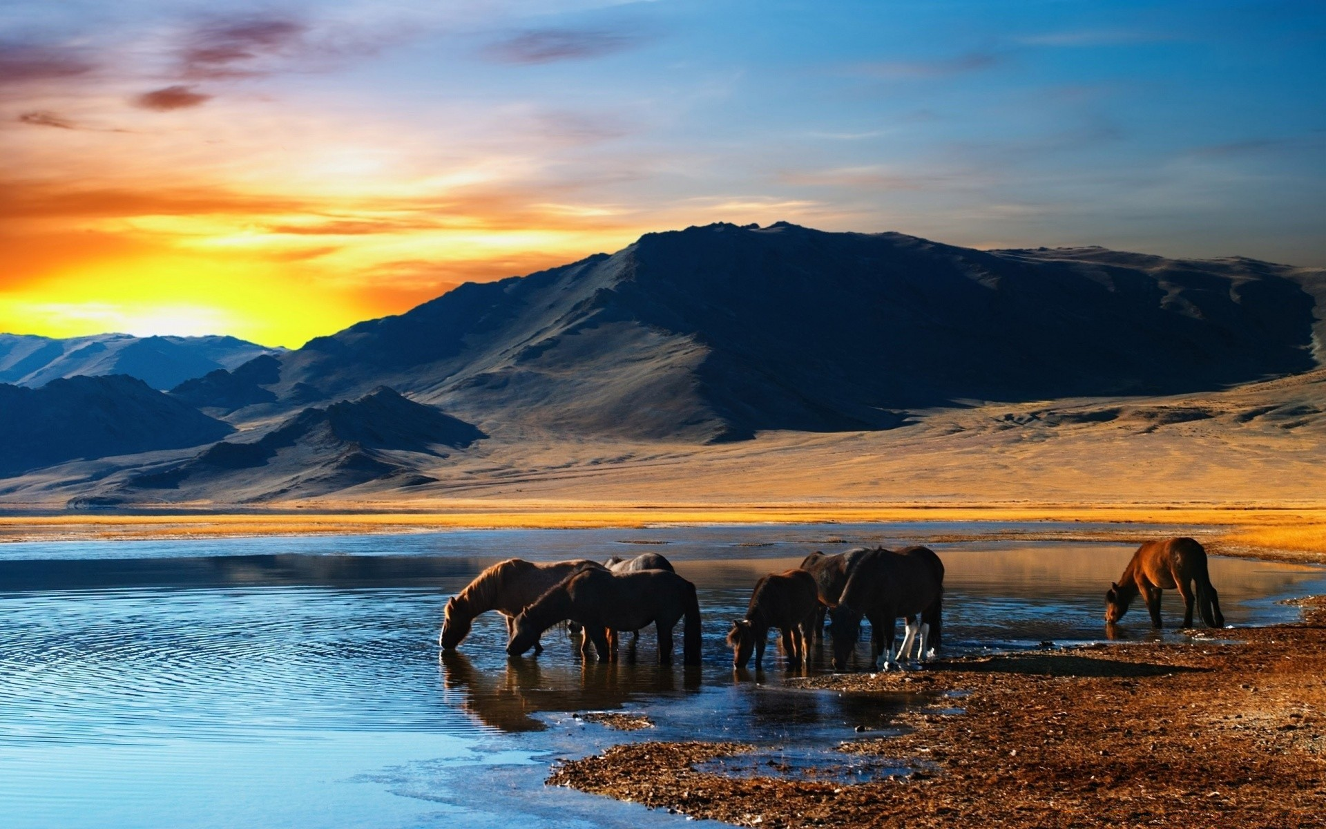 Wild Horses Android Wallpapers For Free