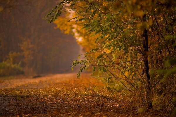 road forest autumn nature