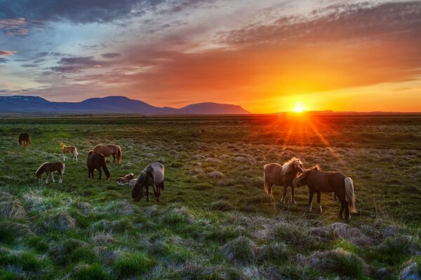 Wild Horses At Sunset